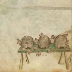 Planche d'un Tractatus de herbis du XIVe siècle